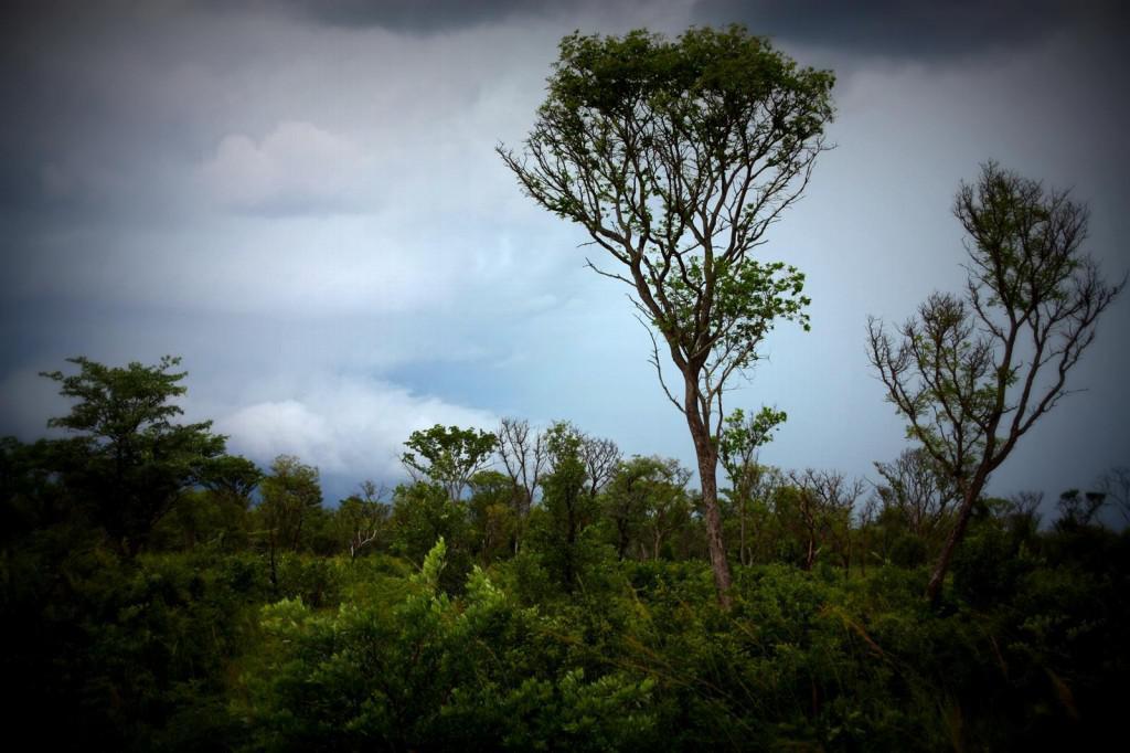 Landscape Khaudum NP (Copy)