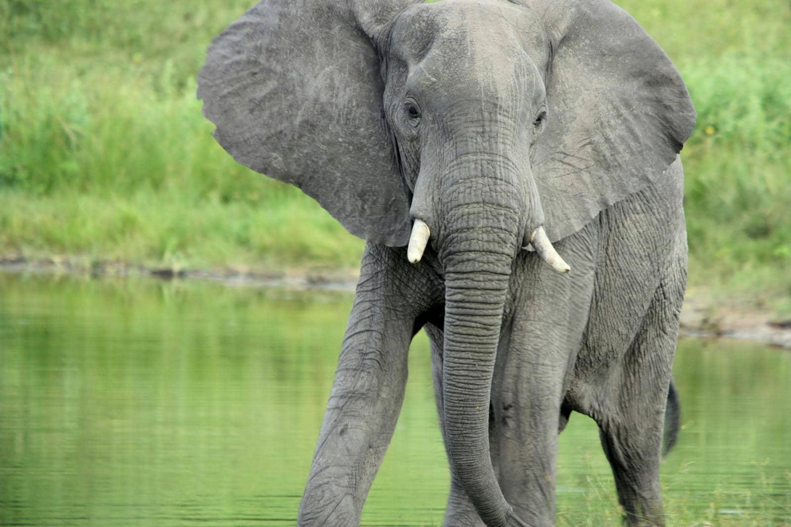 Elephant in the Bwabwata National Park, Namibia.
