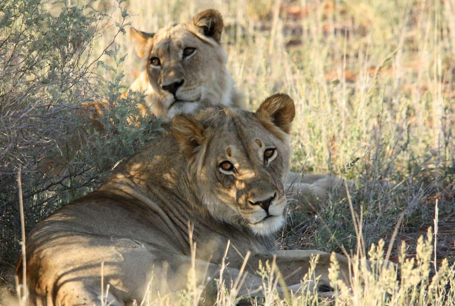 How To Act Around Wild Animals While On Safari