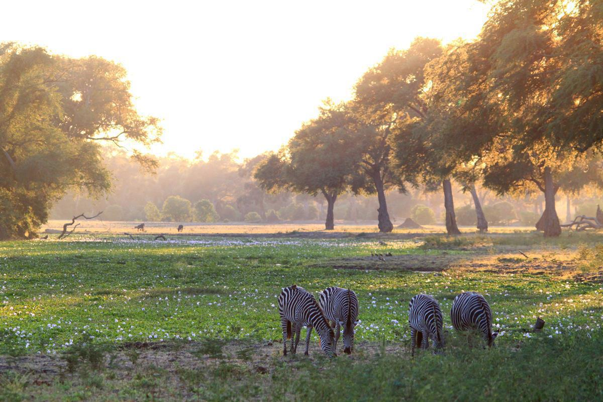 The pure early morning magic of Mana Pools.