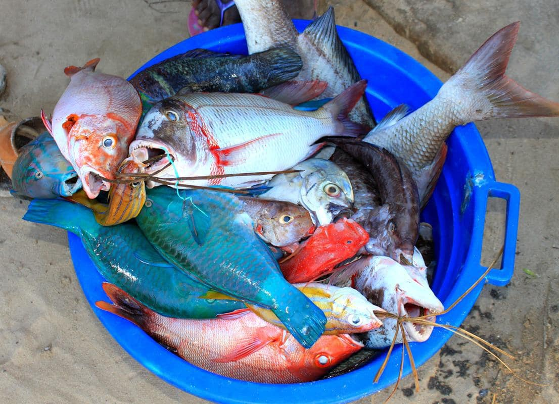 A wide variety of colourful fish to choose from.
