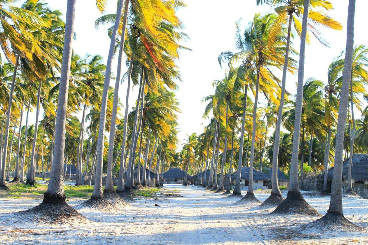 A typical village, with plenty of coconut palm trees.