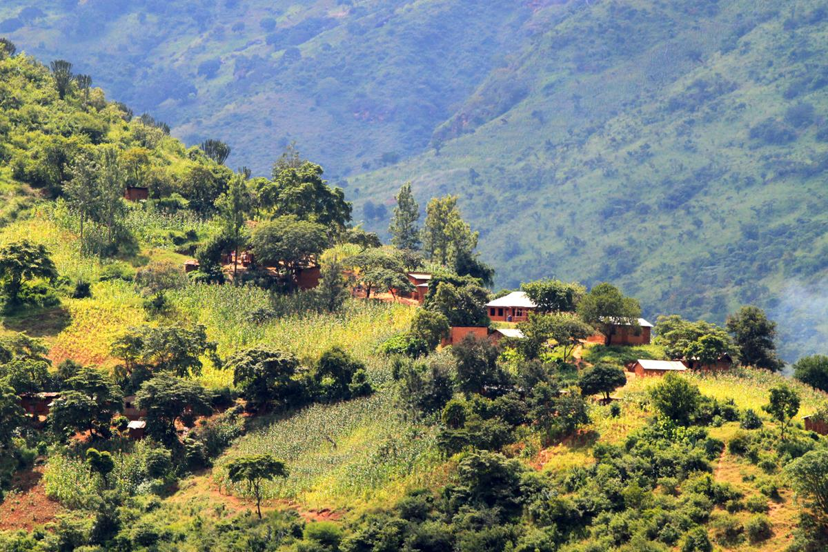 Virtually every square metre of Mount Usambara is cultivated.
