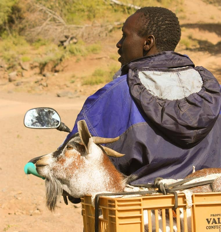 A man transporting his goat.