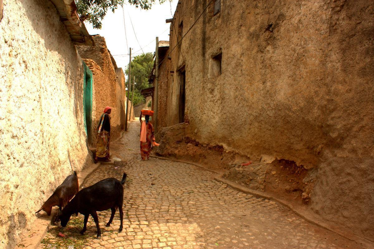 Goats freely roam the streets of Harar.