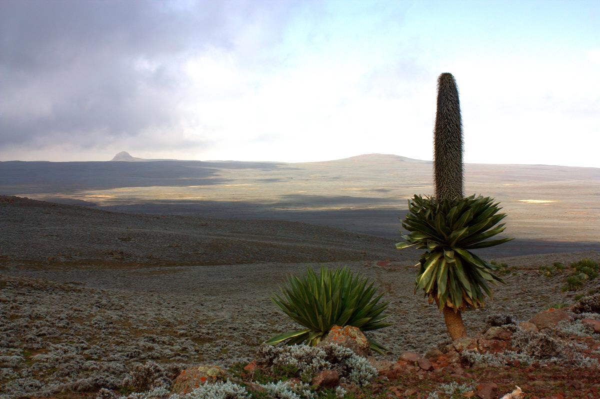 The beautiful landscape of the Sanetti Plateau.