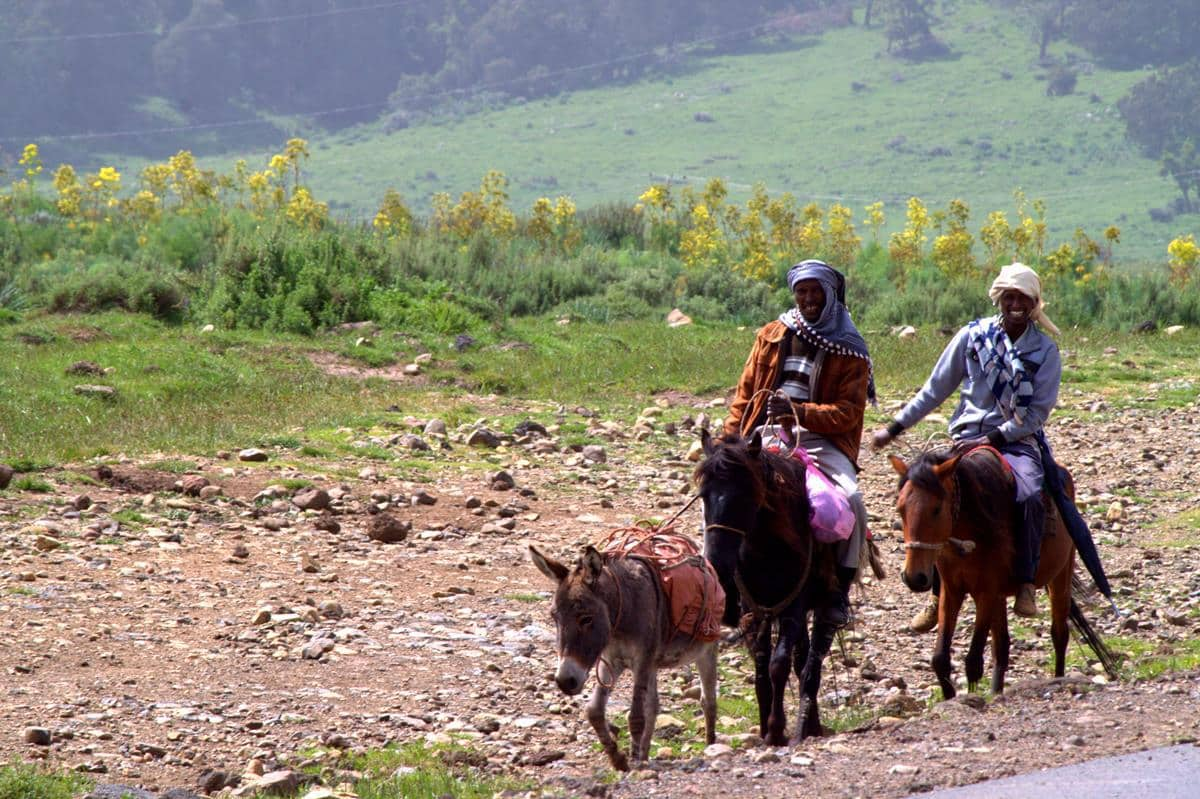 The best way to travel in the Bale Mountains are by donkey or horse.