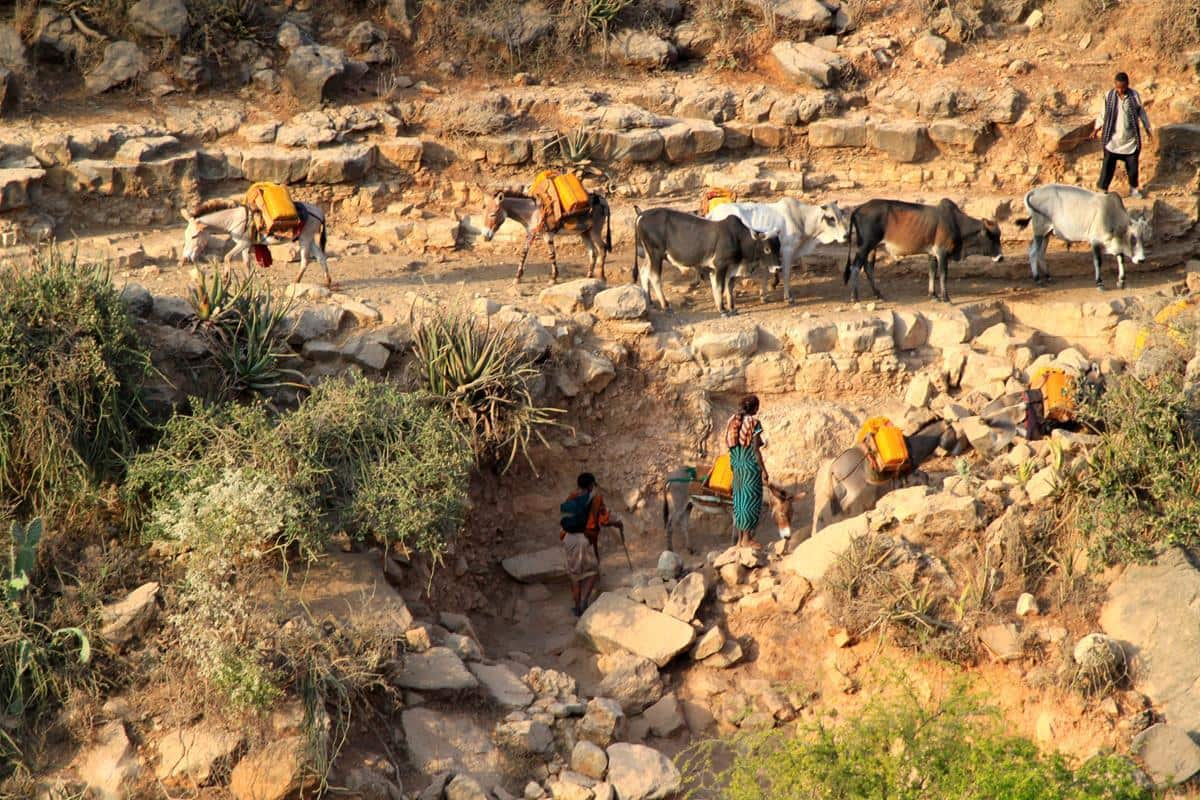 Donkeys carry yellow containers with water up the steep slopes while cattle descend to drink at the mouth of the caves.