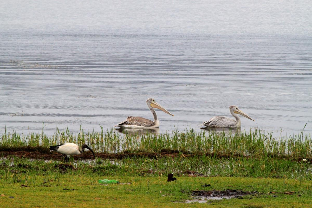 Lake Hayk has a prolific bird life.