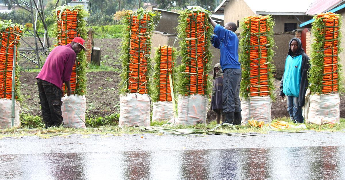 Carrots for Africa!