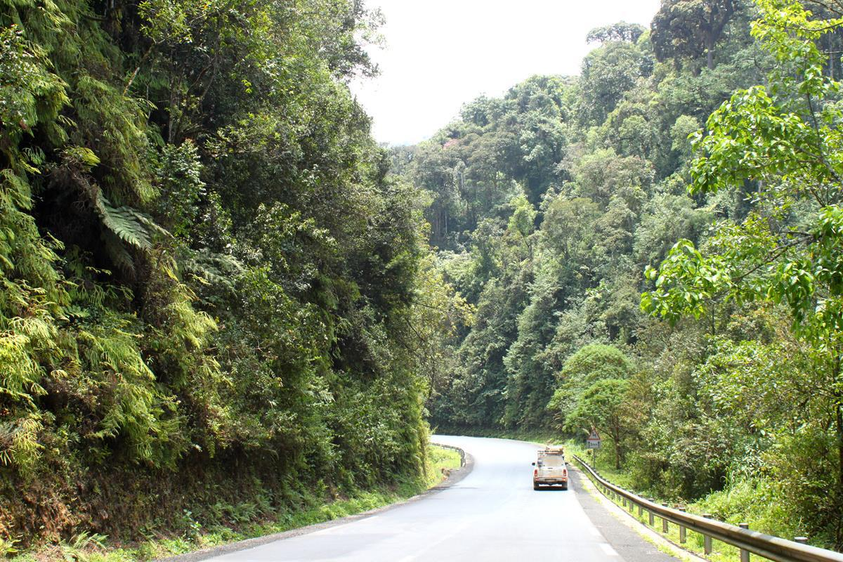 The Nyungwe Forest National Park is covered with virgin forest.