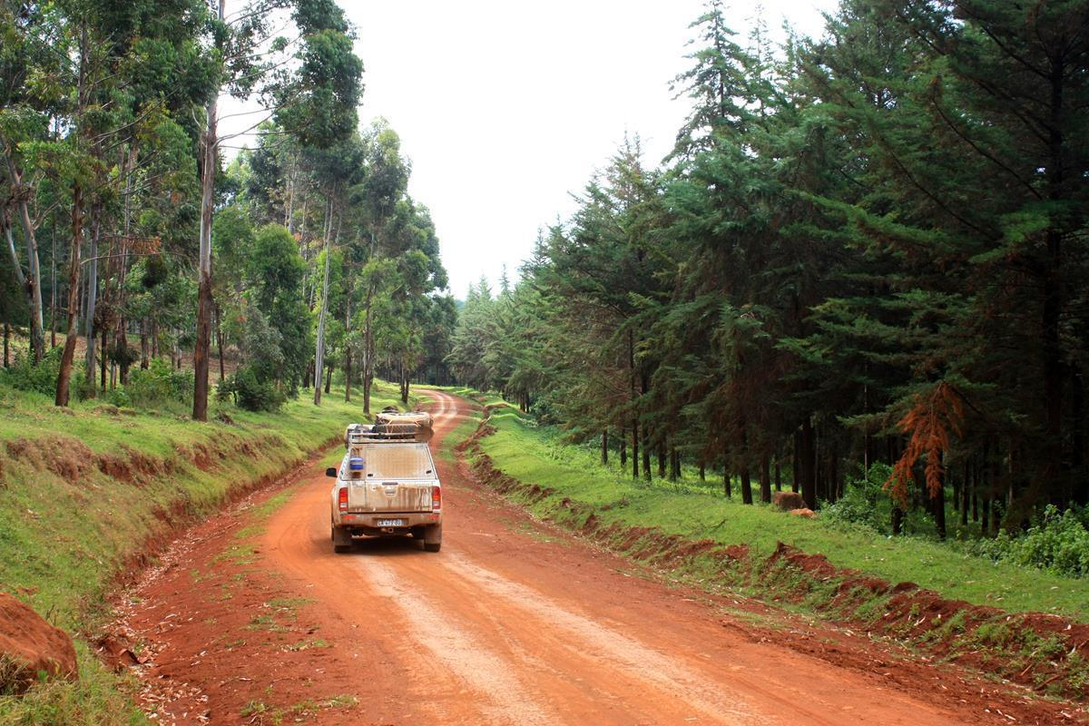 Passing through a pine forest on the way to Sipi.