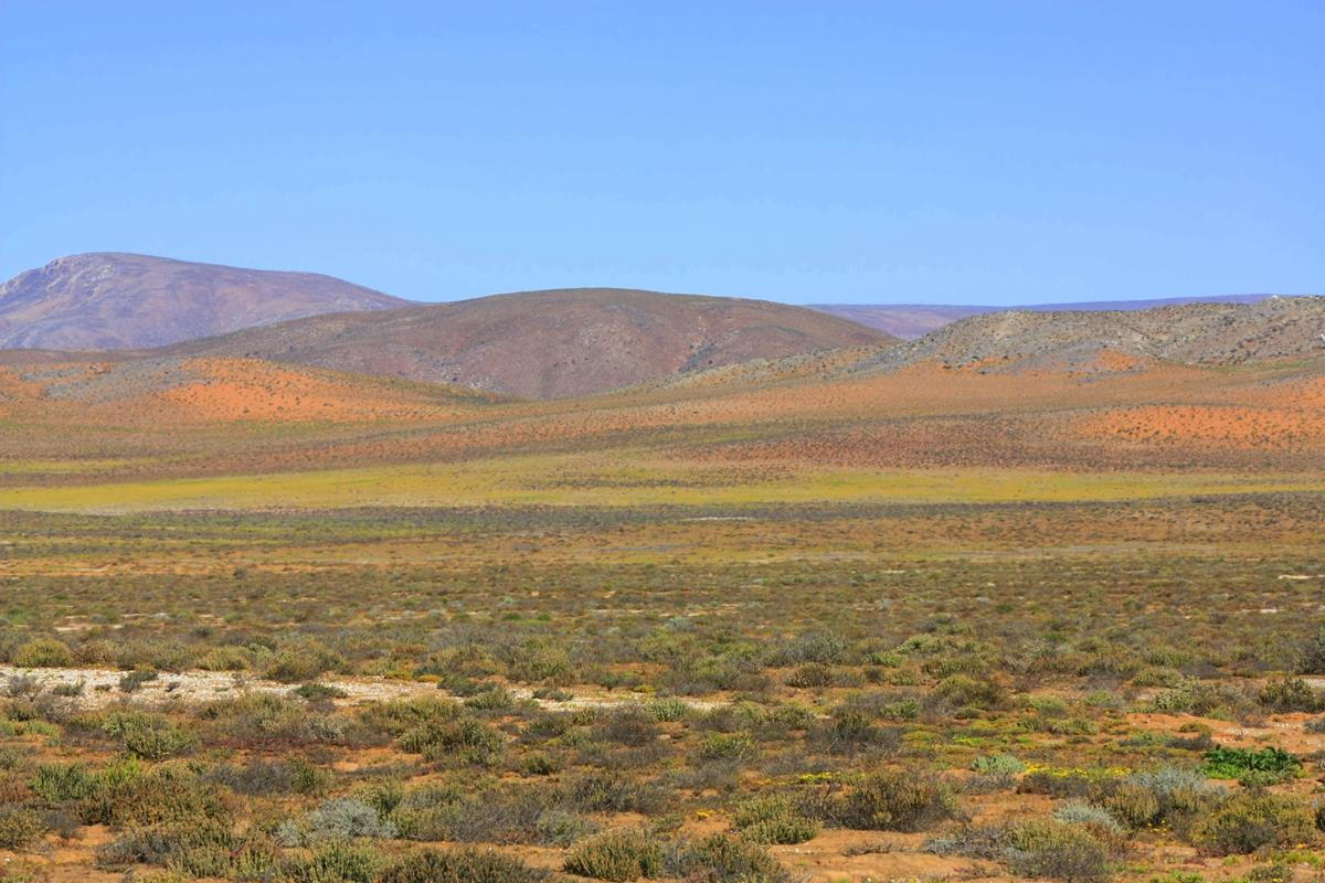 An extraordinary display of different colours in the Richtersveld.