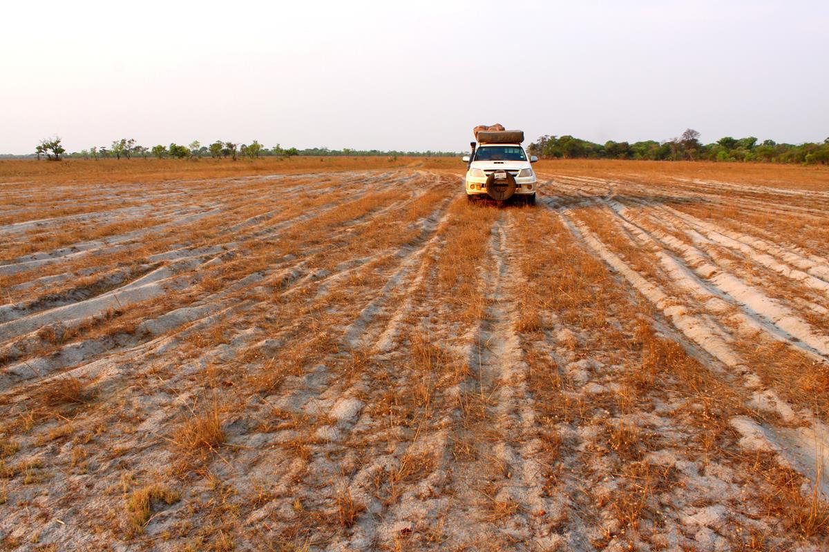 Multiple tracks on the Luena Flats.