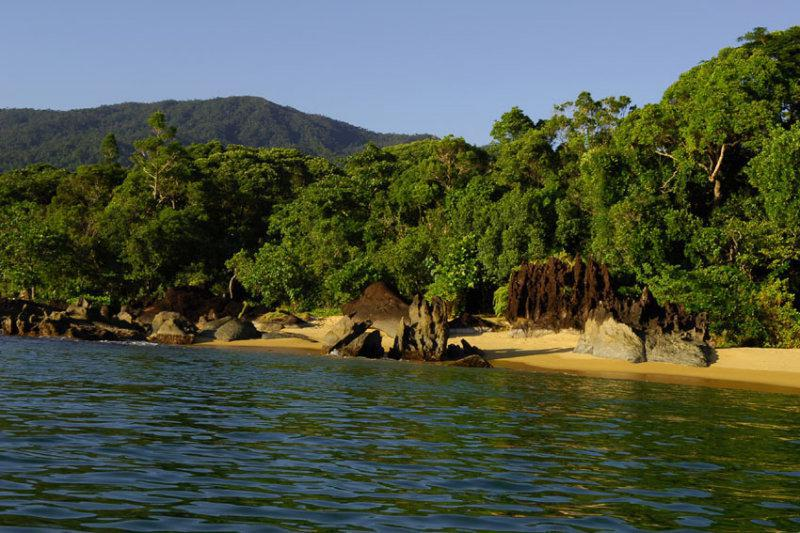 Eastern Madagascan coastal rainforest.