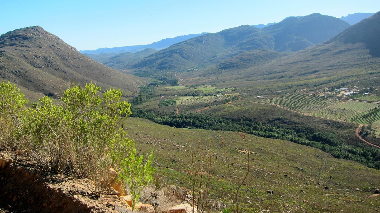 Some Cederberg vineyards.