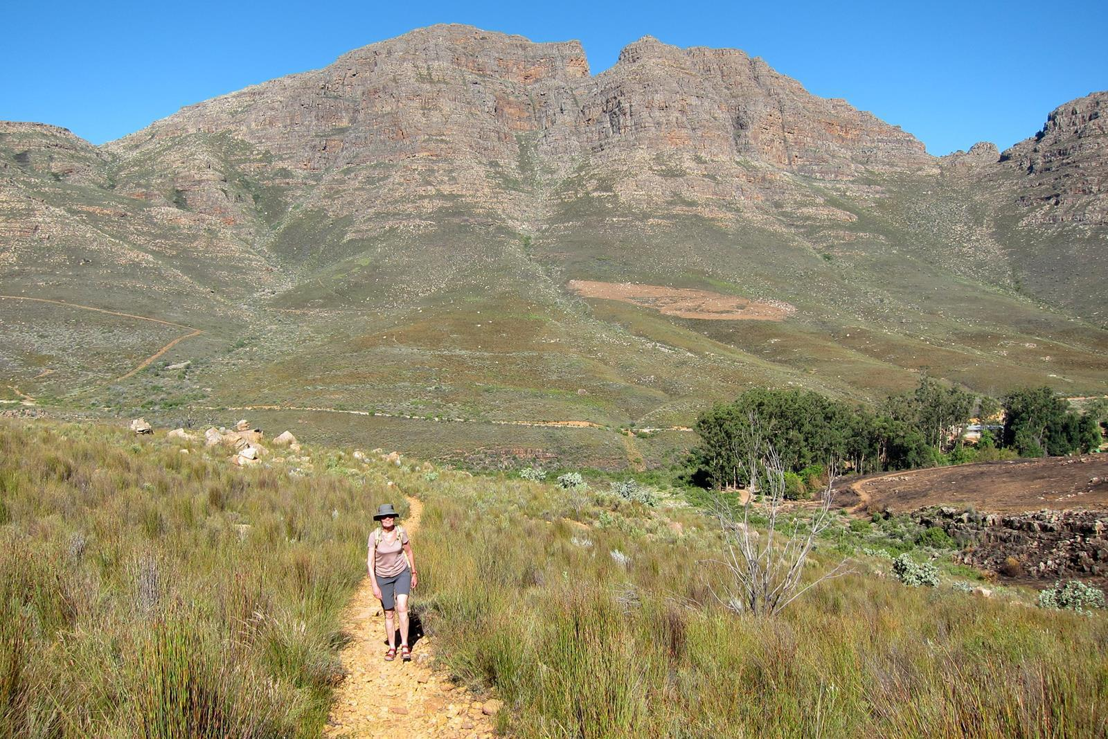 Hike through the Fynbos.