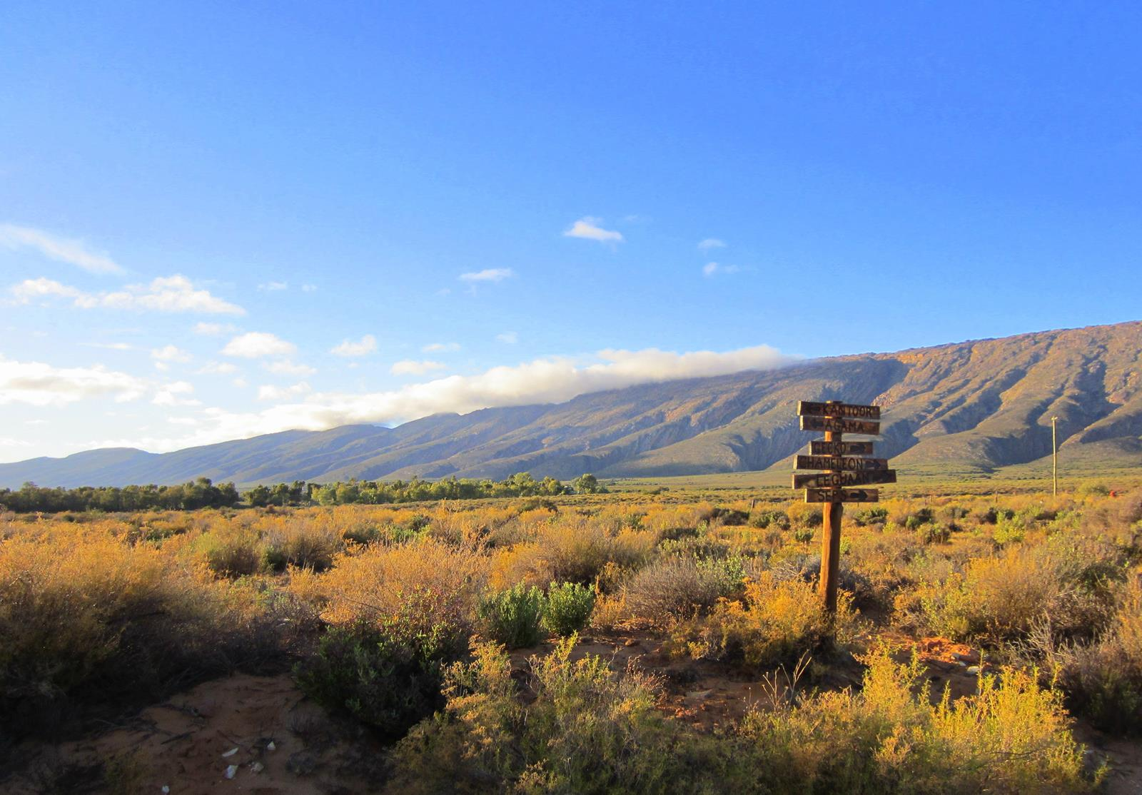 Mountain fynbos mixed with semi-arid Karoo veld.