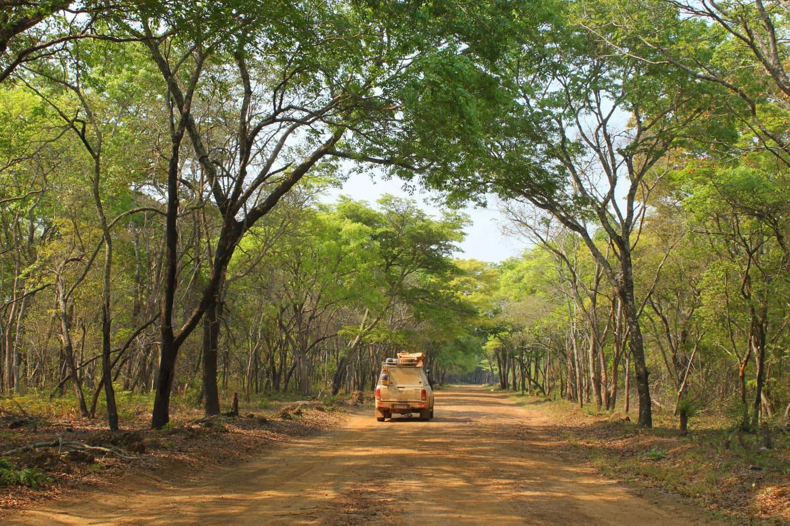 Some of the magnificent forest and Miombo woodland that is left in western Zambia.