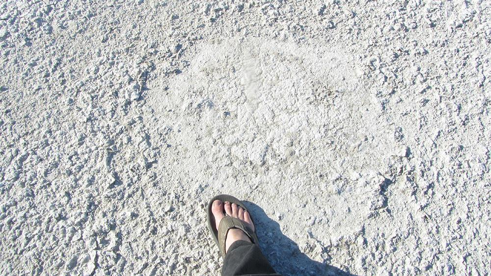 The size of an elephant footprint.