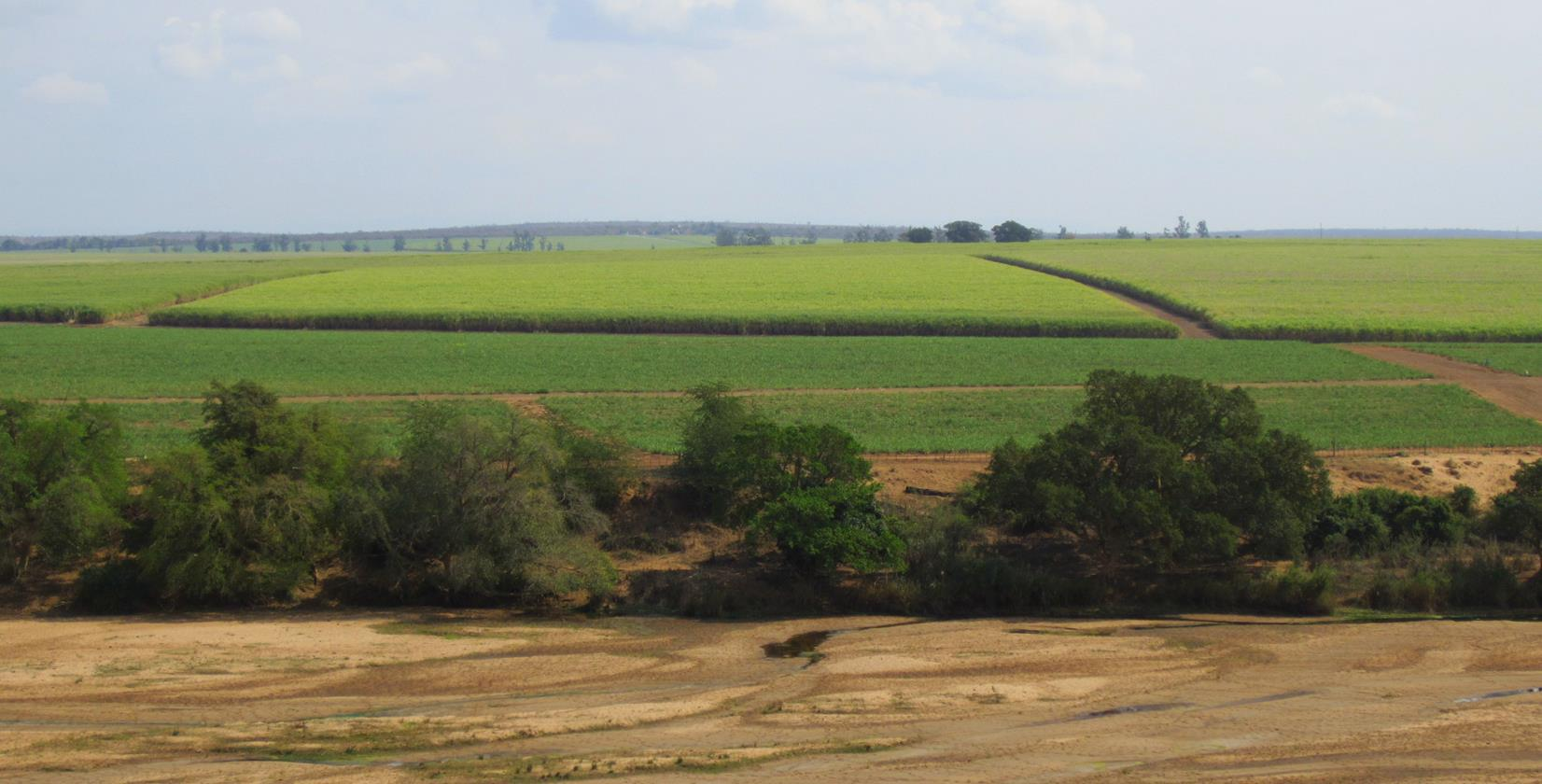 Passing by big sugar cane fields.