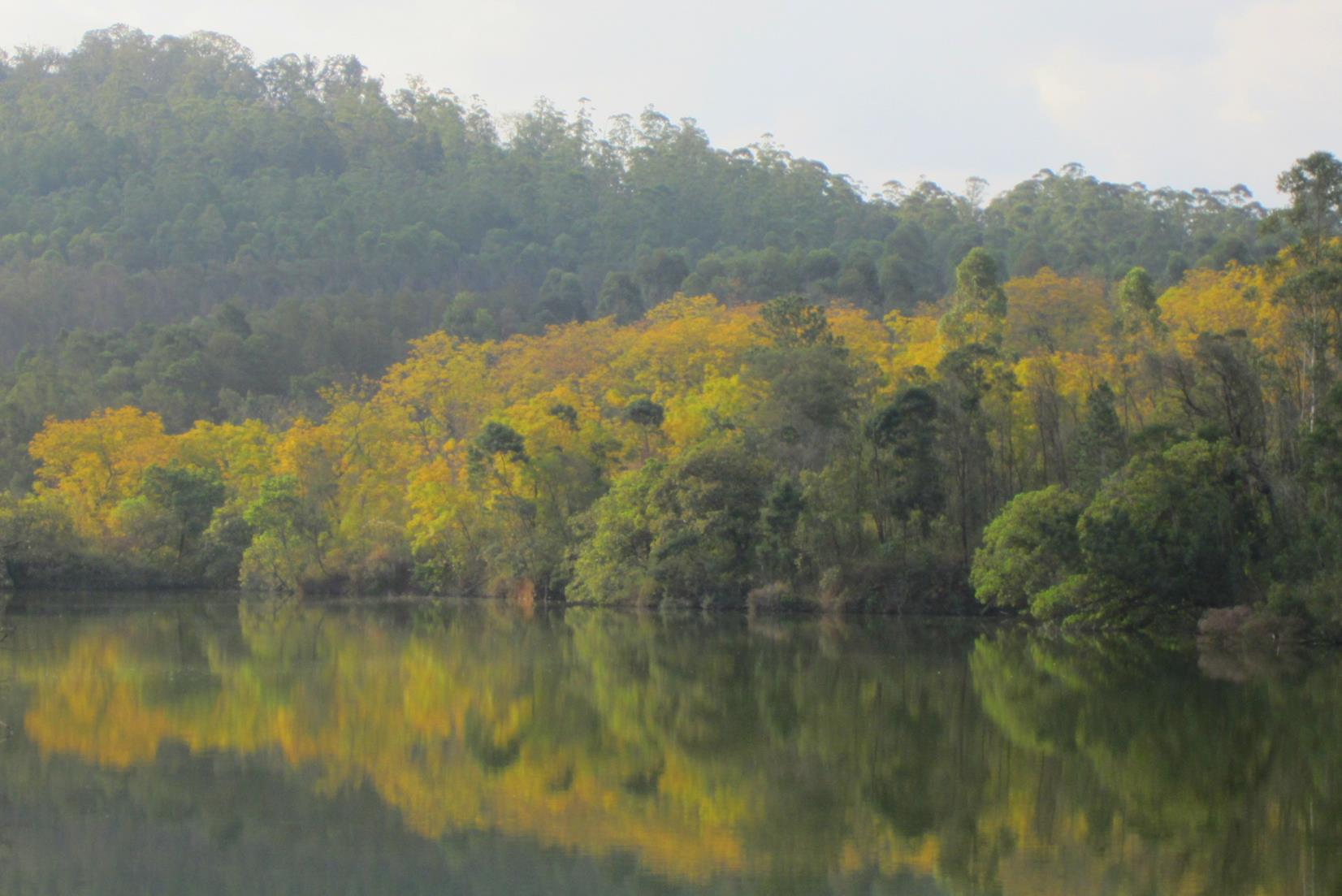 Trees reflecting in the Mlilwane dam.