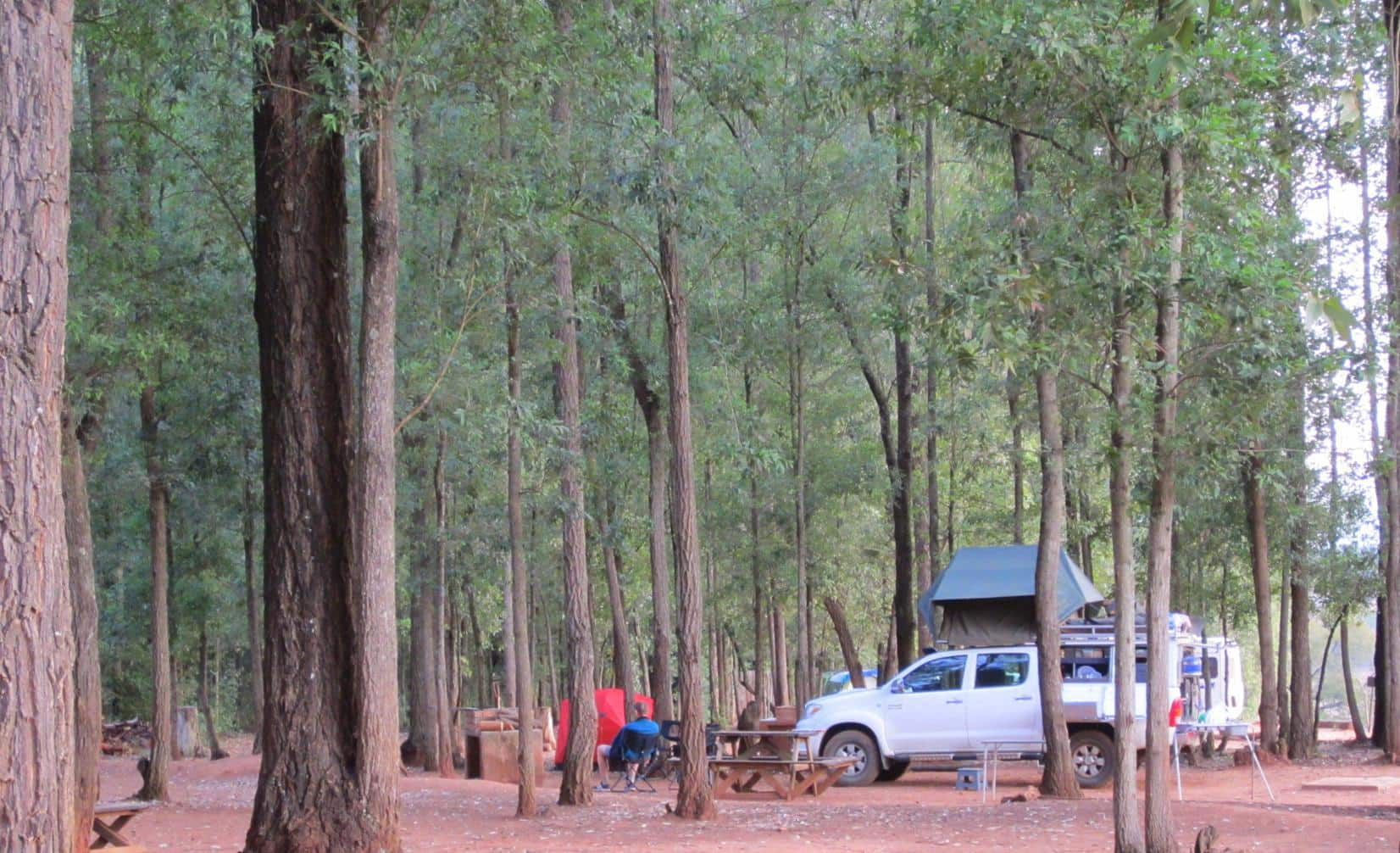 Camping in a gumtree forest.