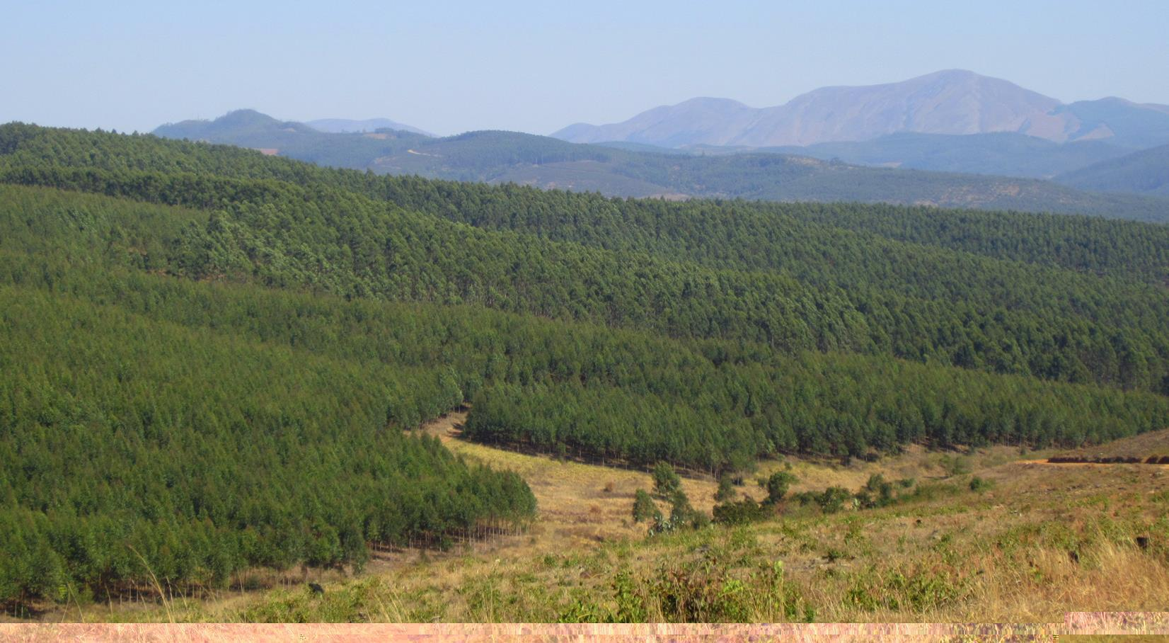 Plantations near Piggs Peak.