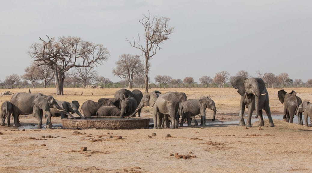Hwange National Park elephants drinking