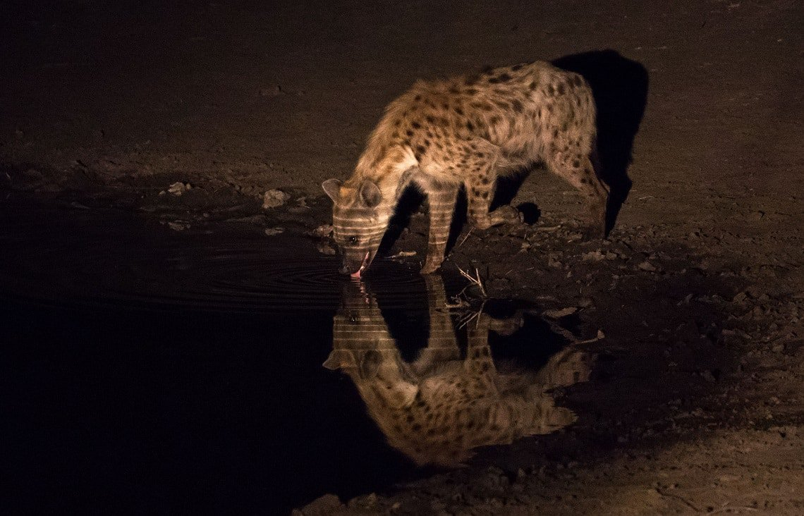 Samuel Cox - Hyena - Night photography tips