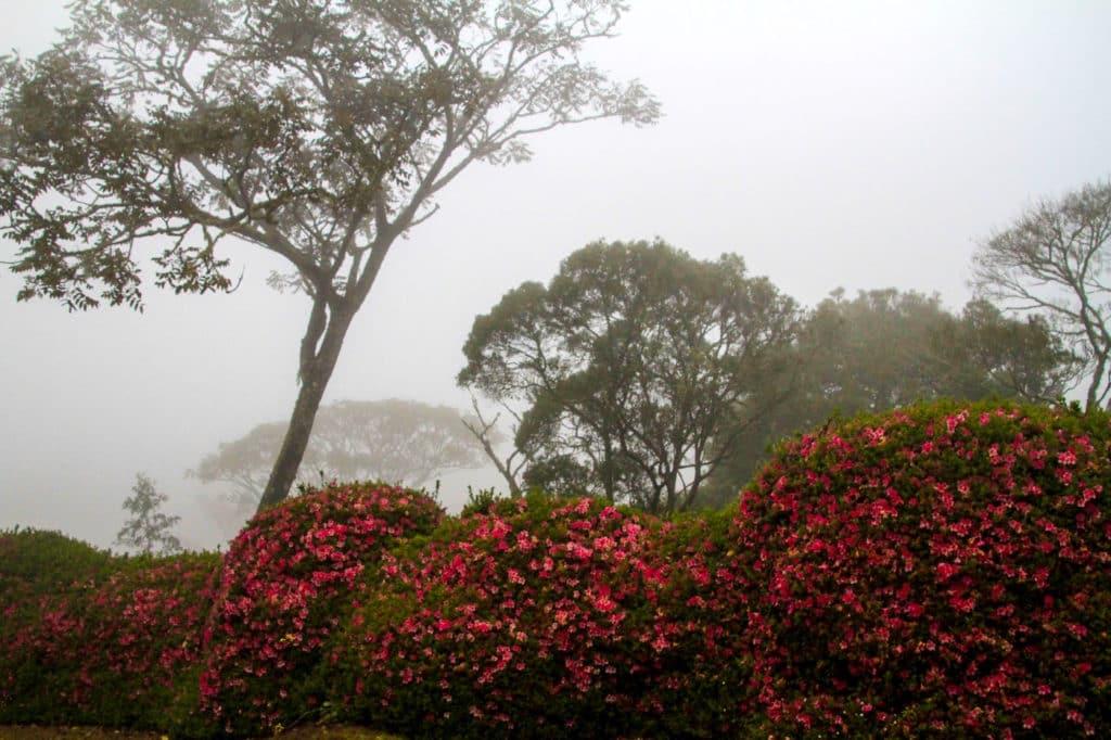 Zimbabwe - Eastern Highlands - Vumba Botanical Gardens - Romi Boom