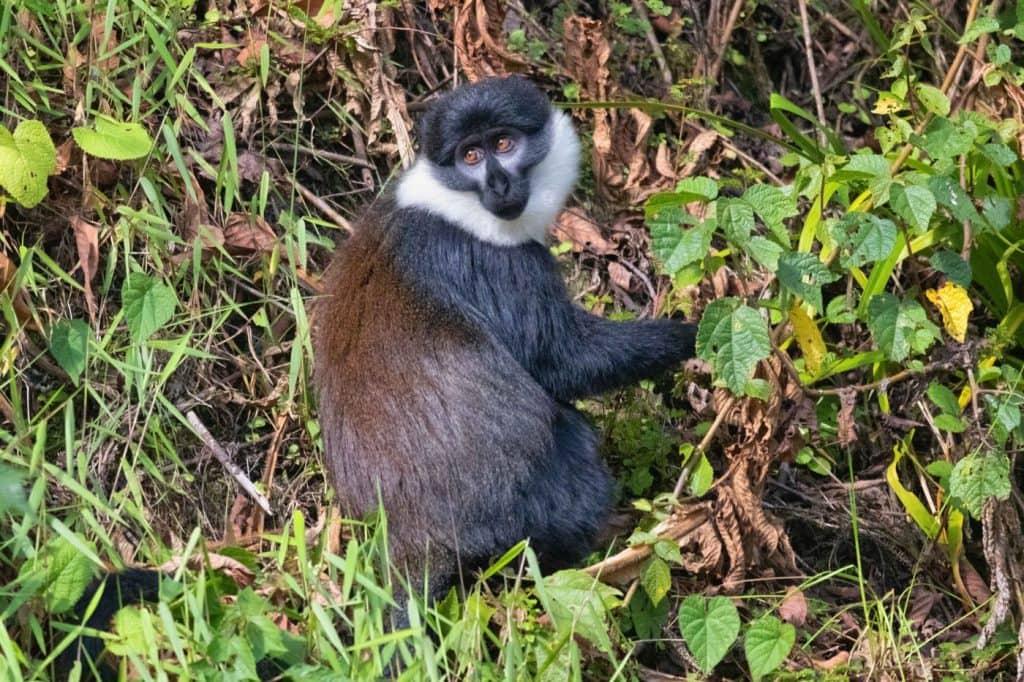 Animals in Nyungwe forest, Rwanda - Johann Groenewald