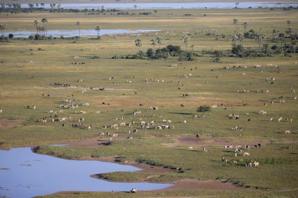 Makgadikgadi wildlife