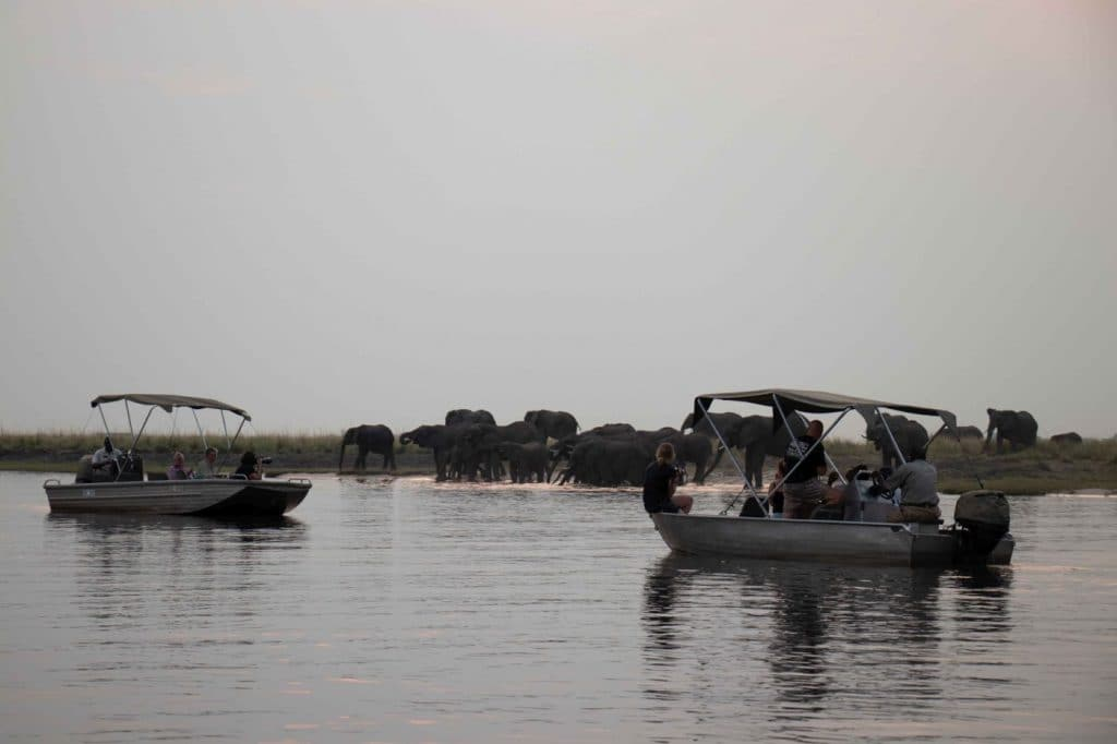 Safari on the Chobe River