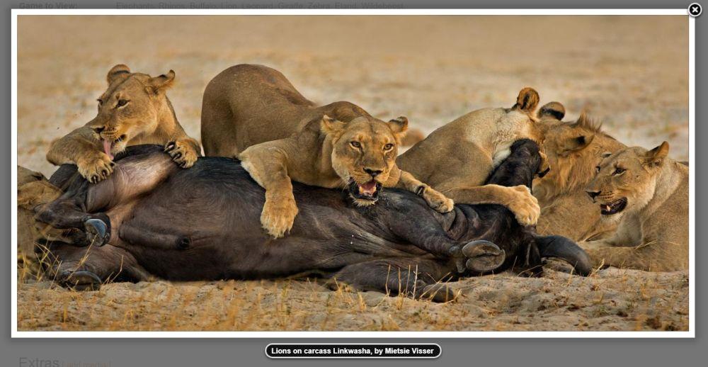 1-Linkwasha Camp Zimbabwe by Mietsie Visser