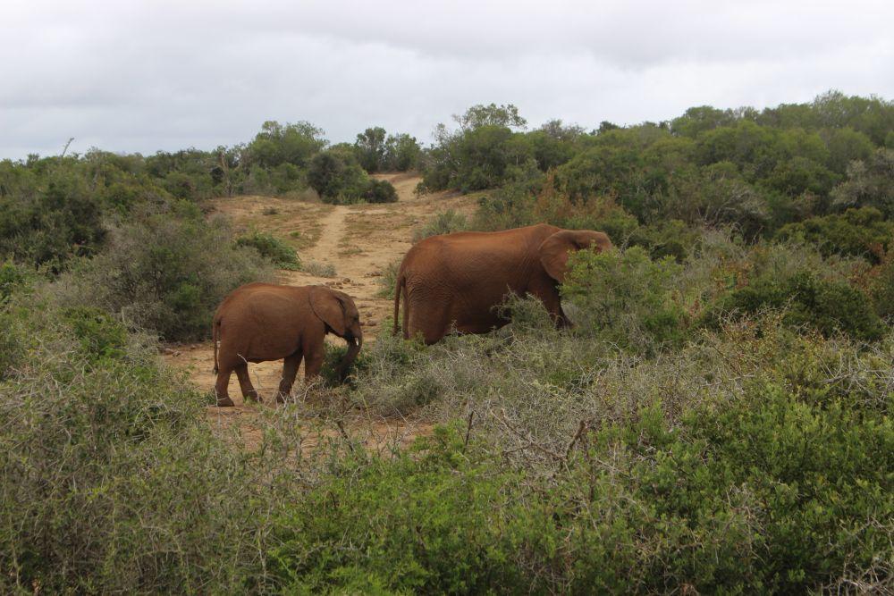 Sanne-Welman-Garden-Route-Elephants